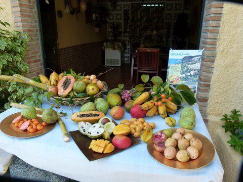 Costa Tropical Granada